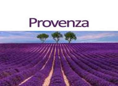 Provenza: la fioritura della lavanda